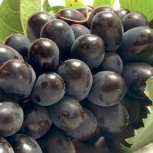Doos pitloze rode Druiven