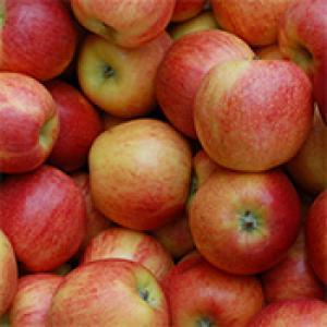 Appel-Goudreinet